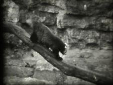 "Normal 8 Privatfilm:"" Tierpark /Ost-Berlin/"" - 1960.J.. №- 2.10a"