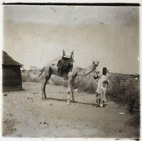 Africa Dromedario Mehara Foto NE9 Placca Da Lente Stereo Vintage Ca 1910