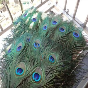 20 Pcs/Lot Top Quality Natural Peacock Feather Decoration DIY Jewelry Handicraft