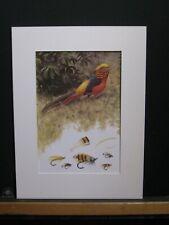 Golden Pheasant, art from 1980s.