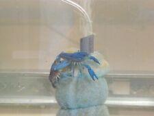 Blue Crayfish Babies born 9 16 2020