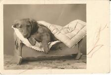 Hund, Dackel liegt im Puppenbett, alte Foto-Ansichtskarte um 1930