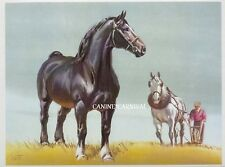 PERCHERON GORGEOUS BLACK  HORSE DRAFT HORSE  Art Print by SAM SAVITT