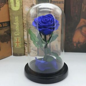 Red Blue Black Pink Forever Flower Immortal Fresh Rose in Glass Valentine's Day