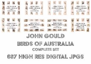 John Gould Birds of Australia. 687 Digital Bird illustrations High res