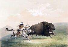 "George Catlin, Buffalo hunting scene, Native American Indian, 20""x14"" CANVAS ART"