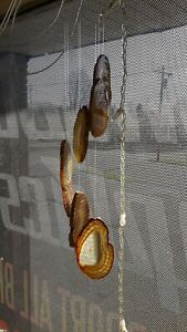 Agate Windchimes - Small - Natural Color Agate Slabs with Bamboo style hanger