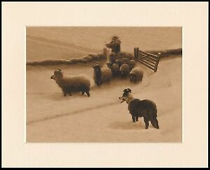 BORDER COLLIE SHEPHERD AND SHEEP SNOW SCENE DOG PRINT MOUNTED READY TO FRAME