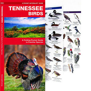 Tennessee Birds A Folding Pocket Guide to Familiar Species NEW