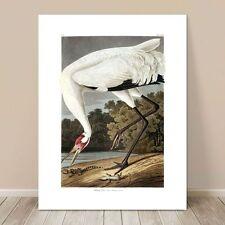 "FAMOUS SEA BIRD ART ~ CANVAS PRINT  8x12"" ~ JOHN AUDUBON ~ Hooping Crane"