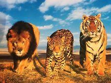 THE WILD CATS Poster  - Wild Animal Medium Size Print ~ Lion Tiger Leopard