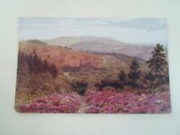 A R QUINTON Postcard *1066 Blackdown From Hindhead - Unposted   §E2804