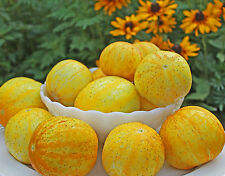 PEPINO LIMON ( lemon cucumber) 30 Semillas Seeds semi graines