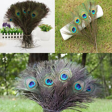 10Pcs Beautiful Natural Peacock Tail Feathers 25-30cm Long For DIY Decoration