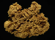Dixie Mine GOLD 0.705 ozt Idaho Springs, Clear Creek County, Colorado 608026