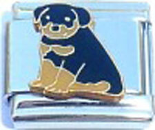 Italian Charm Rottweiler Puppy Dog Family pet Friend