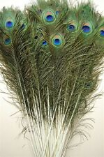 """25 Pcs PEACOCK TAILS Natural Feathers 25-30"""" Craft/Art/Bridal/Costume/Halloween"""