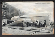 3258 South Africa Sperm Whale Caught Off Durban Postcard