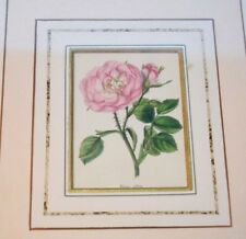 ANTIQUE ROSE PRINT 1835 BENJAMIN MAUND  ORIGINAL HAND COLORED/COPPER ENGRAVE