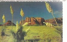 Desert Yucca or Spanish Bayonet  Flowering  Chrome Postcard 267b