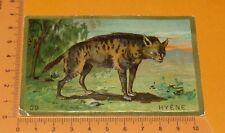 CHROMO BON-POINT IMAGE ECOLE Gaufré 1890-1910 ANIMAUX HYENE