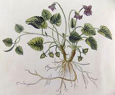 1543 [1774] Leonhard FUCHS Salamon Schinz FOLIO - Viola - 38cm - hand col