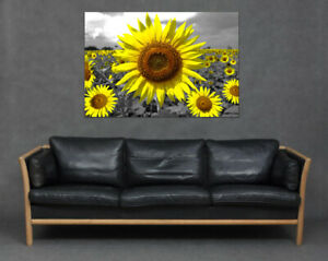 Large Sunflower Yellow Greyscale Wall Art Print Canvas Picture Kitchen Happy Sun