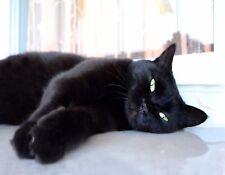 METAL FRIDGE MAGNET Black Cat Green Eyes Laying On Side Cats Kitten Kittens
