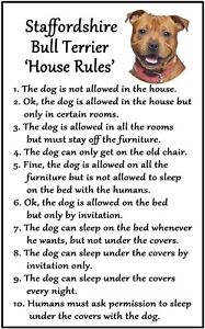 Staffy, Staffie RED 'House Rules' Flexible Magnet. Sticks to any metal surface