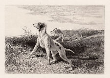"""LOOK Karl BODMER ORIGINAL 1800s Etching """"Trusty Hunting Dogs"""" SIGNED Framed COA"""