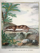 Buffon Large Edition Original Colored Print Guyana Otter - 1784