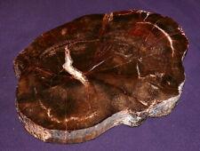 Versteinertes Holz Eiche excellent Oregon 864,4g 183x137x18mm Ofen Kamin Deko
