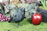 Furry Animal Feather Black CROW Raven Bird Taxidermy Horror Haunted Halloween S