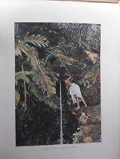 iles sous le vent/Gravure 19°in folio couleur/ Végétation aux iles Sous le vent