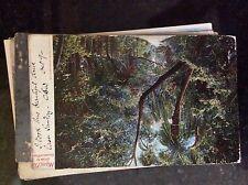 B1e postcard old used 1900s miami coconut grove
