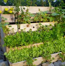 Herb Garden Collection, Large, Heirloom, Organic Seeds, 13 Varieties of Herbs