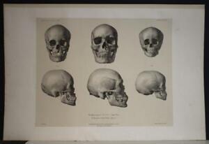 MANGAREVA NATIVE SKULLS GAMBIER ISLANDS 1841 DUMONT D'URVILLE ANTIQUE PLATE