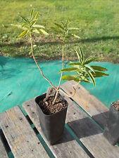 Deciduous Light 4 (0 to 5 °C) Plants, Seeds & Bulbs