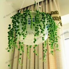 105pcs/bag Pearl Chlorophytum Seeds Succulent bonsai Beads Senecio Rowleyanus Pl
