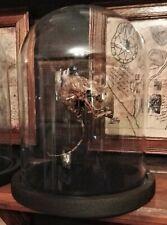 Alchemie Präparat Mumifizierte Ratte Rattus Murinae im Glasdome Bizarr Unikat