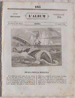 ALBUM DI ROMA ARCHEOLOGIA TODI UMBRIA MURATORI 1835