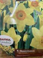 5 Narcissus Large Cupped Red Devon Zones: 3-8