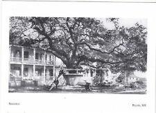 "*Postcard-""The Shoofly""(Wooden Porch on Oak Tree) /Biloxi, Mississippi/ (A22-2)"