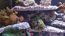 marine tank live rock artificial flat reef bones scape plate plating coral frags