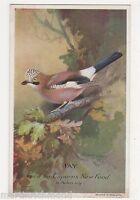 Jay, Capern's Advertising Card, B558