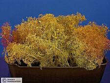 Diorama Zubehör, Meerschaum für Diorama Bäume u. Geländebau, 1:72 - 1:48