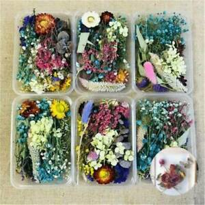 Assroetd Real Dried Flowers Pressed Leaves DIY For Epoxy Resin Jewelry Making US