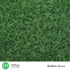 McKays Buffalo Grass Seed Blend (50%)- 2kg - Free Postage - Lawn Seed