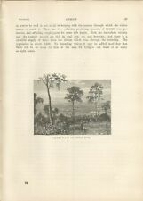 AUSTRALIA THE EMU PLAINS AND NEPEAN RIVER 1890 ENGRAVING ANTIQUE PRINT