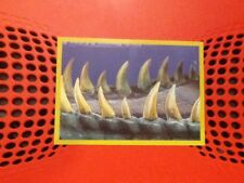 #66 Panini Dinosaurs Like Me sticker / unused